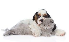 Котенок обнимать щенка Spaniel кокерспаниеля молодой Изолировано на белизне Стоковая Фотография