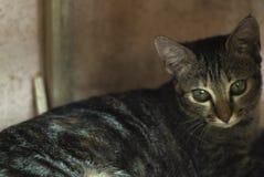 Котенок ослабляя под тенью Стоковые Изображения RF