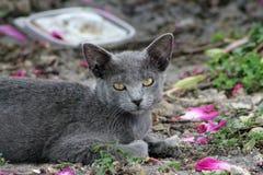Котенок отдыхая на земле Стоковое Изображение RF