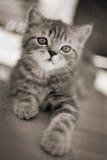 Котенок - симпатичное filmgrain! Стоковая Фотография RF