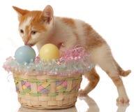 котенок пасхи корзины Стоковые Изображения