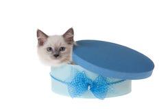 котенок подарка коробки вне смотрря прищурясь стоковое фото