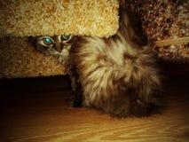 котенок под креслом стоковые фотографии rf