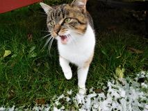 Котенок под трейлером в траве снега Стоковые Изображения RF
