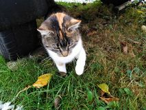 Котенок под трейлером в траве снега стоковая фотография