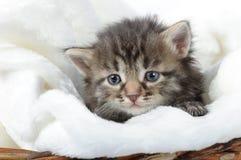 котенок предпосылки немногая белое Стоковая Фотография