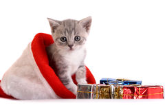 котенок предпосылки играет белизну Стоковая Фотография