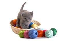котенок предпосылки играет белизну Стоковое Изображение