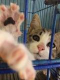 Котенок пробуя схватить камеру Стоковое фото RF