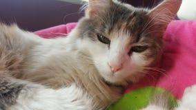 Котенок просыпая вверх в после полудня Стоковое Изображение