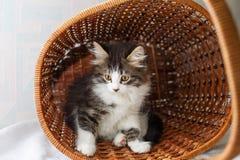 Котенок пряча в корзине Стоковая Фотография
