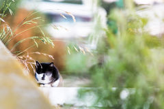 Котенок пряча в саде Стоковая Фотография