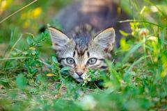 Котенок пряча в траве Стоковое Изображение RF