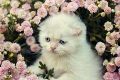 Котенок пряча в цветках Стоковая Фотография