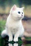 котенок пущи Стоковые Фотографии RF
