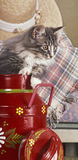 Котенок древесины Norvegian Стоковая Фотография