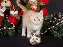 котенок рождества стоковая фотография rf