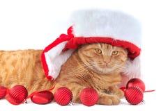 котенок рождества Стоковые Фото