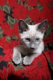 котенок рождества Стоковое Фото