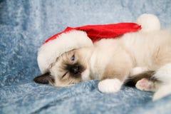 котенок рождества Стоковое фото RF