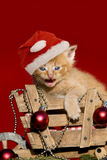 Котенок рождества на красной предпосылке Стоковое фото RF