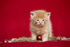 Котенок рождества на красной предпосылке Стоковое Фото