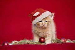 Котенок рождества на красной предпосылке Стоковые Фото
