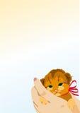 Котенок, руки, имбирь, предпосылка Стоковая Фотография