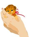Котенок, руки, имбирь иллюстрация вектора