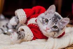 Котенок Санта Клаус Стоковые Изображения RF