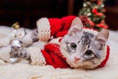 Котенок Санта Клаус Стоковые Фото