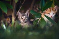 котенок семьи большого кота малый Стоковое Изображение