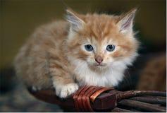 Котенок сидя на бамбуковой корзине стоковое изображение
