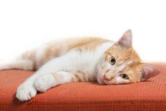 Котенок сидя на оранжевой софе ткани изолированной на белизне Стоковая Фотография