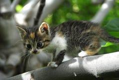 котенок симпатичный Стоковые Фото