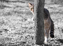котенок симпатичный Стоковое Фото