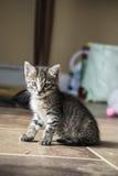котенок сиротливый Стоковое Изображение