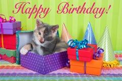 Котенок ситца в коробках дня рождения Стоковое фото RF