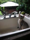 Котенок сидя в раковине Стоковые Изображения RF