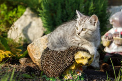 Котенок сидя на искусственном еже Стоковые Изображения