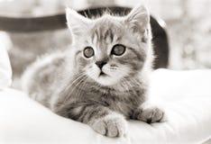 Котенок сидя на стуле Стоковая Фотография