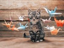Котенок сидя среди бумажных кранов origami Стоковые Изображения RF