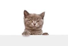 Котенок смотря вне из-за плаката изолировано Стоковые Фото