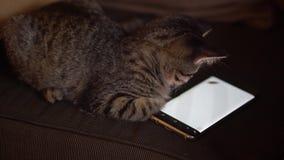 Котенок смотря мобильный экран акции видеоматериалы