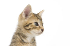 котенок смотря правый tabby стоковые фотографии rf
