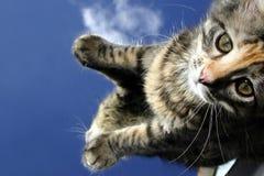 котенок смотря uo стоковые фотографии rf