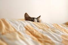 котенок сонный Стоковое Изображение RF