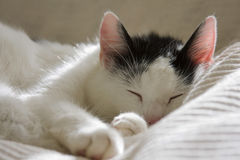 котенок сонный Стоковые Фото