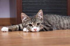 котенок сонный Стоковые Изображения
