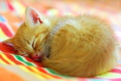 Котенок спать маленький красный Стоковые Изображения RF